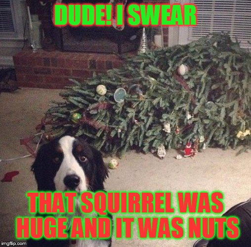 Dog Christmas Tree | DUDE! I SWEAR THAT SQUIRREL WAS HUGE AND IT WAS NUTS | image tagged in dog christmas tree | made w/ Imgflip meme maker