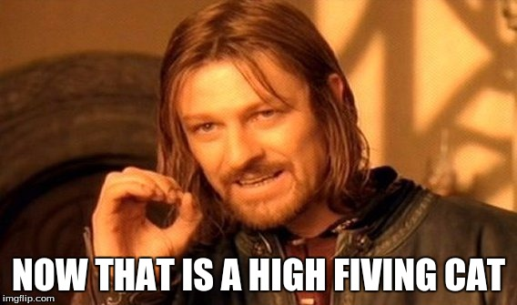 One Does Not Simply Meme | NOW THAT IS A HIGH FIVING CAT | image tagged in memes,one does not simply | made w/ Imgflip meme maker