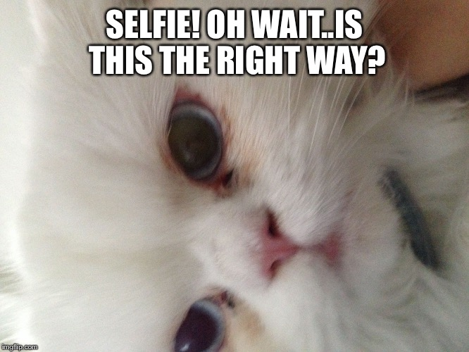 SELFIE! OH WAIT..IS THIS THE RIGHT WAY? | image tagged in look into my eyes | made w/ Imgflip meme maker