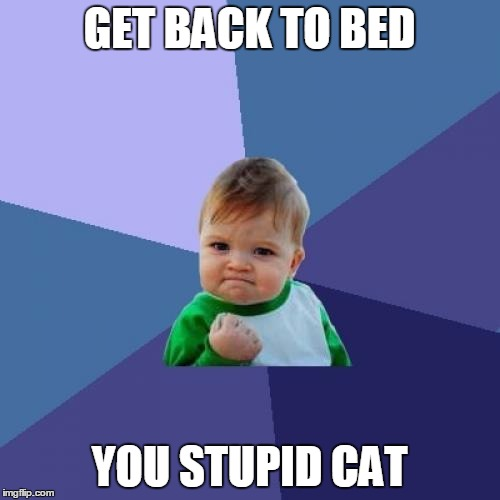 Success Kid Meme | GET BACK TO BED YOU STUPID CAT | image tagged in memes,success kid | made w/ Imgflip meme maker