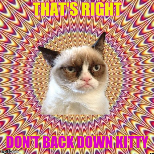 THAT'S RIGHT DON'T BACK DOWN KITTY | made w/ Imgflip meme maker