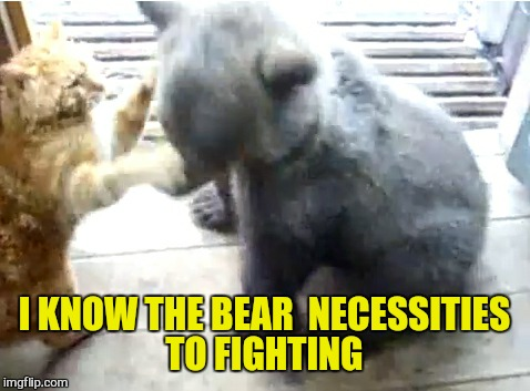 I KNOW THE BEAR  NECESSITIES TO FIGHTING | made w/ Imgflip meme maker