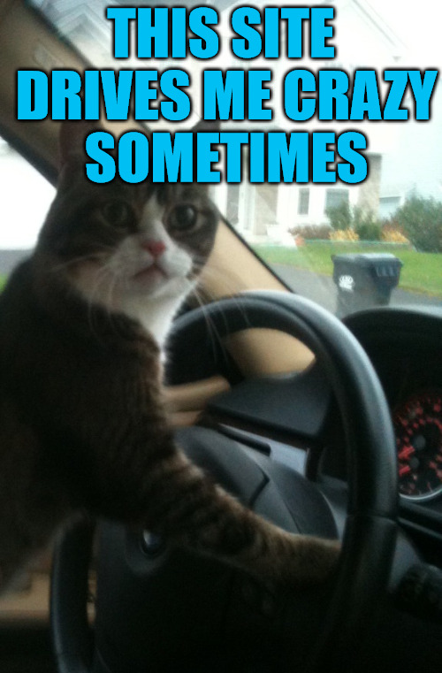 This Site Drives Me Crazy Sometimes | THIS SITE DRIVES ME CRAZY SOMETIMES | image tagged in jojo the driving cat,it came from the comments,logic has no place here,we regulate ourselves | made w/ Imgflip meme maker