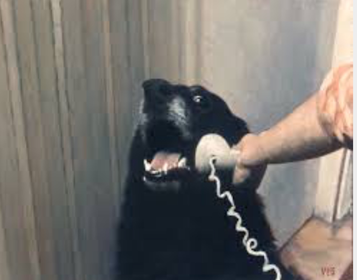 Hello Yes This Is Dog Blank Template Imgflip
