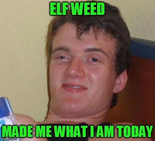 10 Guy Meme | ELF WEED MADE ME WHAT I AM TODAY | image tagged in memes,10 guy | made w/ Imgflip meme maker
