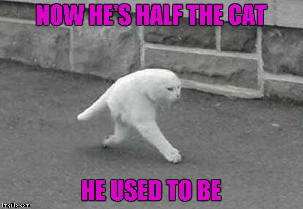 NOW HE'S HALF THE CAT HE USED TO BE | made w/ Imgflip meme maker