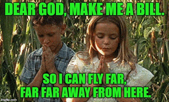 DEAR GOD, MAKE ME A BILL. SO I CAN FLY FAR, FAR FAR AWAY FROM HERE. | made w/ Imgflip meme maker