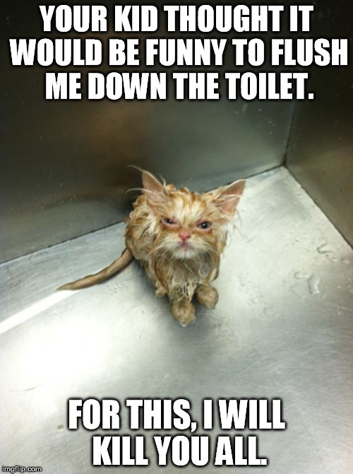 Kill You Cat | YOUR KID THOUGHT IT WOULD BE FUNNY TO FLUSH ME DOWN THE TOILET. FOR THIS, I WILL KILL YOU ALL. | image tagged in memes,kill you cat | made w/ Imgflip meme maker