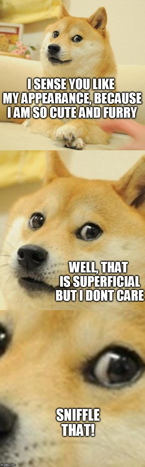 Doge Game |  I SENSE YOU LIKE MY APPEARANCE, BECAUSE I AM SO CUTE AND FURRY; WELL, THAT IS SUPERFICIAL BUT I DONT CARE; SNIFFLE THAT! | image tagged in doge game | made w/ Imgflip meme maker