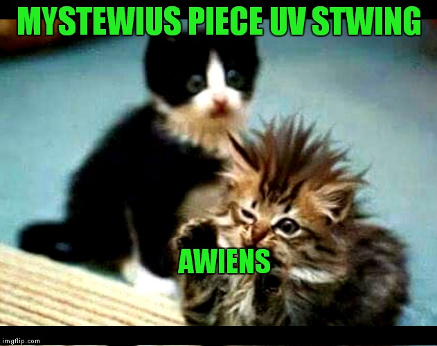 Giorgio's cat.... |  MYSTEWIUS PIECE UV STWING; AWIENS | image tagged in ancient aliens,cute kittens,omg cat,hilarious | made w/ Imgflip meme maker