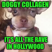 Get the collagen they said, it'll be fun they said  | DOGGY COLLAGEN IT'S ALL THE RAVE IN HOLLYWOOD | image tagged in poor puppy must have ate a bee,memes,lol | made w/ Imgflip meme maker