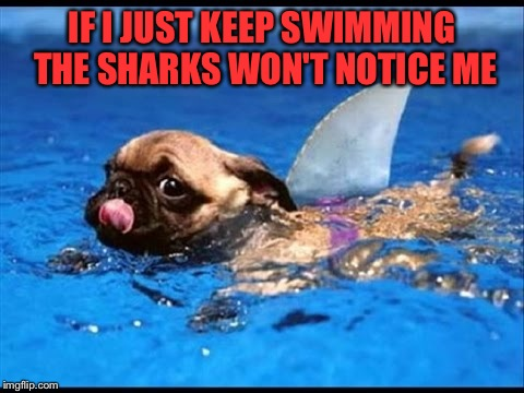 IF I JUST KEEP SWIMMING THE SHARKS WON'T NOTICE ME | image tagged in memes,lol | made w/ Imgflip meme maker