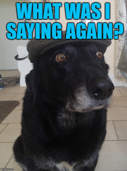 Back In My Day Dog | WHAT WAS I SAYING AGAIN? | image tagged in back in my day dog | made w/ Imgflip meme maker