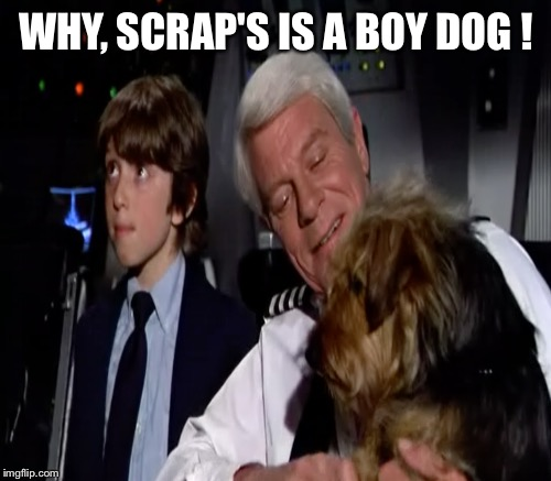 WHY, SCRAP'S IS A BOY DOG ! | made w/ Imgflip meme maker