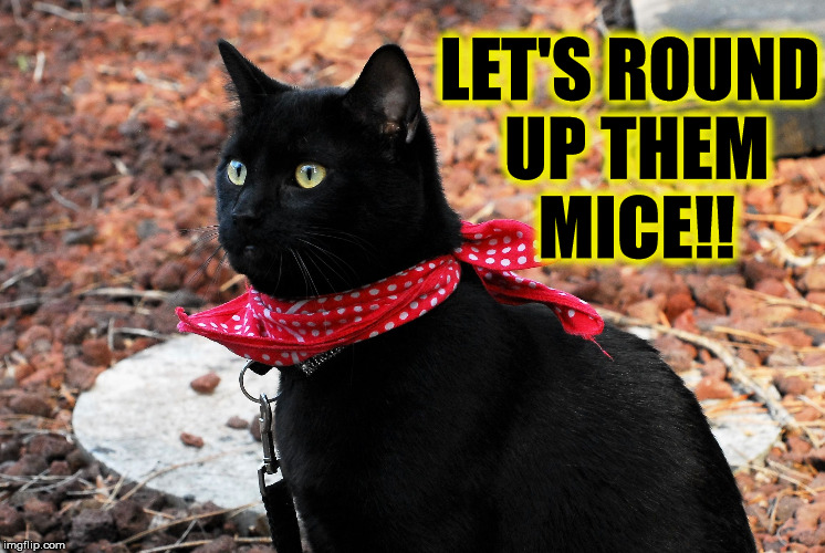 Mouse Roundup | LET'S ROUND UP THEM MICE!! | image tagged in mouse roundup,cats,bandana | made w/ Imgflip meme maker