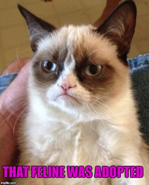 Grumpy Cat Meme | THAT FELINE WAS ADOPTED | image tagged in memes,grumpy cat | made w/ Imgflip meme maker