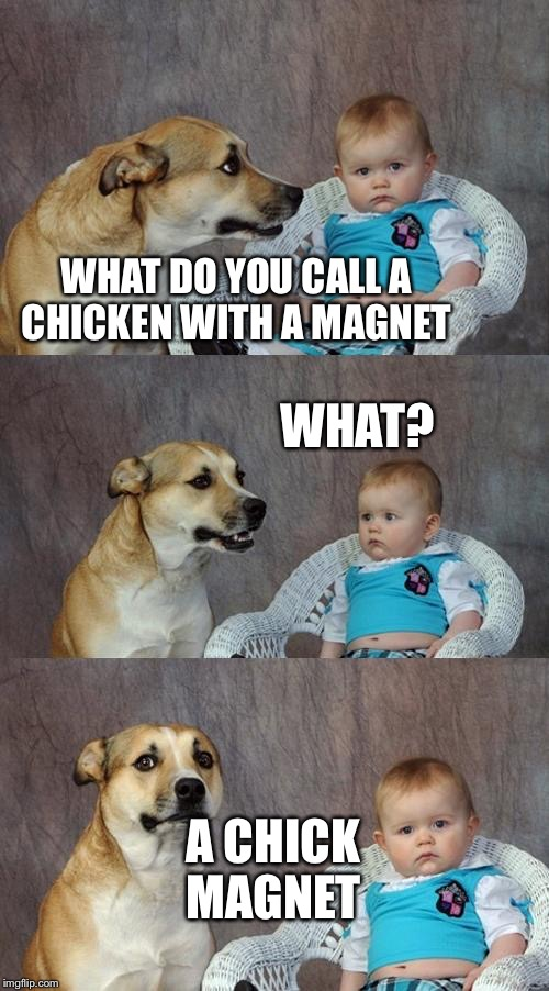 Makes sense  | WHAT DO YOU CALL A CHICKEN WITH A MAGNET WHAT? A CHICK MAGNET | image tagged in memes,dad joke dog,chick magnet | made w/ Imgflip meme maker