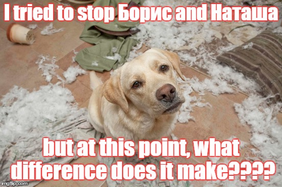 I tried to stop Борис and Наташа but at this point, what difference does it make???? | image tagged in bad dog | made w/ Imgflip meme maker