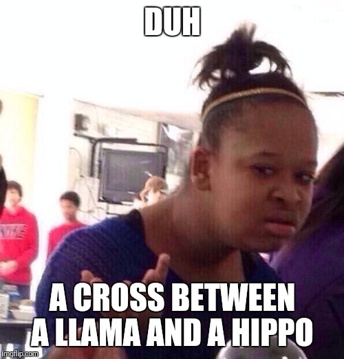 Black Girl Wat Meme | DUH A CROSS BETWEEN A LLAMA AND A HIPPO | image tagged in memes,black girl wat | made w/ Imgflip meme maker