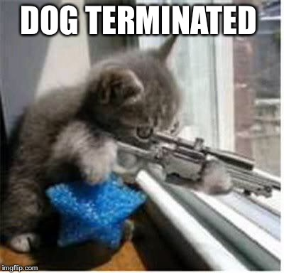 cats with guns | DOG TERMINATED | image tagged in cats with guns | made w/ Imgflip meme maker
