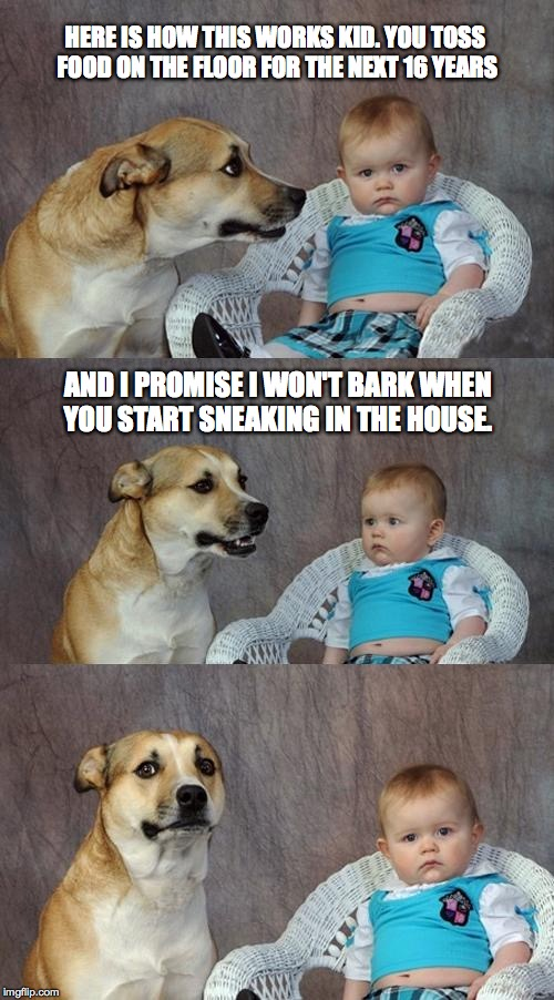 Dad Joke Dog Meme | HERE IS HOW THIS WORKS KID. YOU TOSS FOOD ON THE FLOOR FOR THE NEXT 16 YEARS AND I PROMISE I WON'T BARK WHEN YOU START SNEAKING IN THE HOUSE | image tagged in memes,dad joke dog | made w/ Imgflip meme maker