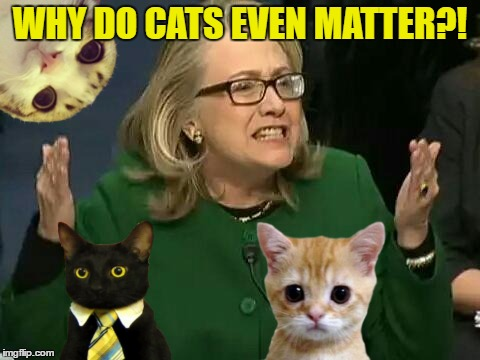 WHY DO CATS EVEN MATTER?! | made w/ Imgflip meme maker