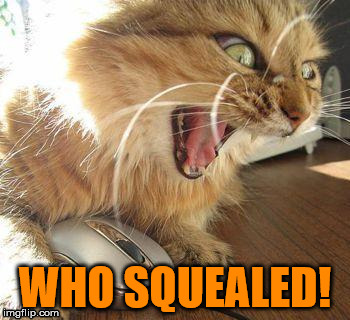 WHO SQUEALED! | made w/ Imgflip meme maker