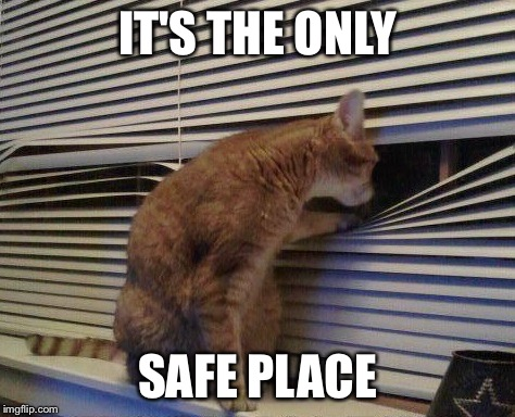 Cat Looking Through Blinds | IT'S THE ONLY SAFE PLACE | image tagged in cat looking through blinds | made w/ Imgflip meme maker