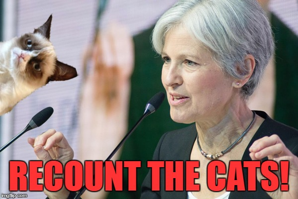 RECOUNT THE CATS! | made w/ Imgflip meme maker