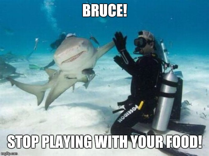 Currently front page on imgflippers  | BRUCE! STOP PLAYING WITH YOUR FOOD! | image tagged in memes,animals,funny,food,imgflippers | made w/ Imgflip meme maker