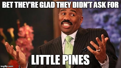 Steve Harvey Meme | BET THEY'RE GLAD THEY DIDN'T ASK FOR LITTLE PINES | image tagged in memes,steve harvey | made w/ Imgflip meme maker
