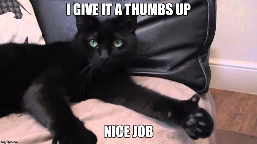 thumbs up cat | I GIVE IT A THUMBS UP NICE JOB | image tagged in thumbs up cat | made w/ Imgflip meme maker