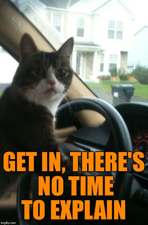JoJo The Driving Cat | GET IN, THERE'S NO TIME TO EXPLAIN | image tagged in jojo the driving cat | made w/ Imgflip meme maker