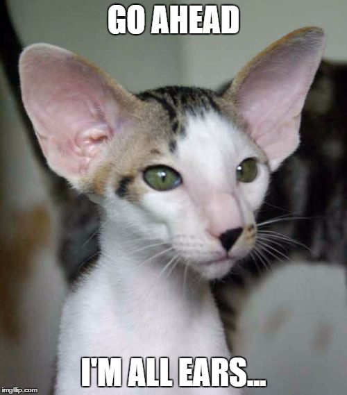 Must pay attention ! |  GO AHEAD; I'M ALL EARS... | image tagged in cute cat,funny cat | made w/ Imgflip meme maker