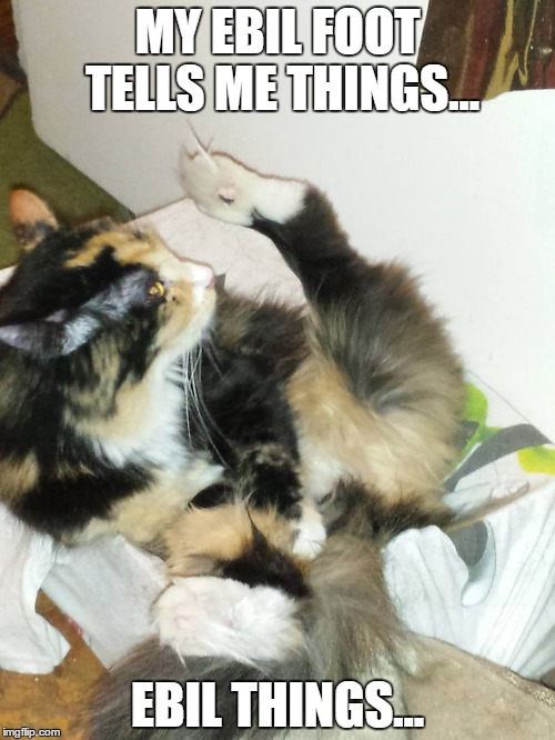 Ebil things.. |  MY EBIL FOOT TELLS ME THINGS... EBIL THINGS... | image tagged in cute cat,shenanigans,adorable | made w/ Imgflip meme maker