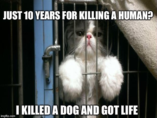 JUST 10 YEARS FOR KILLING A HUMAN? I KILLED A DOG AND GOT LIFE | made w/ Imgflip meme maker