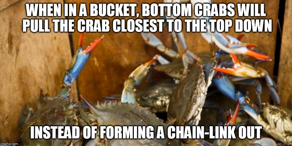 People often act in the same manner | WHEN IN A BUCKET, BOTTOM CRABS WILL PULL THE CRAB CLOSEST TO THE TOP DOWN INSTEAD OF FORMING A CHAIN-LINK OUT | image tagged in crabs,memes,life | made w/ Imgflip meme maker