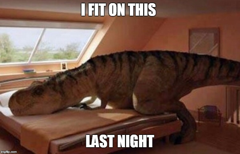 T rex |  I FIT ON THIS; LAST NIGHT | image tagged in t rex | made w/ Imgflip meme maker