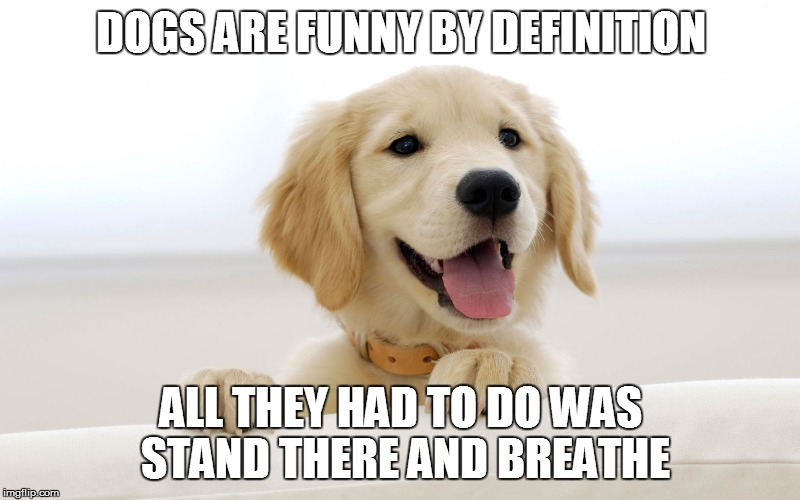 DOGS ARE FUNNY BY DEFINITION ALL THEY HAD TO DO WAS STAND THERE AND BREATHE | made w/ Imgflip meme maker