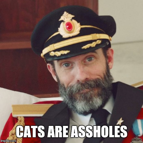 CATS ARE ASSHOLES | made w/ Imgflip meme maker