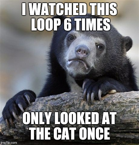Confession Bear Meme | I WATCHED THIS LOOP 6 TIMES ONLY LOOKED AT THE CAT ONCE | image tagged in memes,confession bear | made w/ Imgflip meme maker