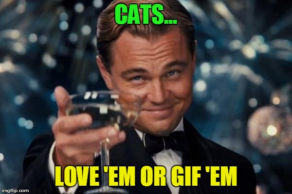 Leonardo Dicaprio Cheers Meme | CATS... LOVE 'EM OR GIF 'EM | image tagged in memes,leonardo dicaprio cheers | made w/ Imgflip meme maker
