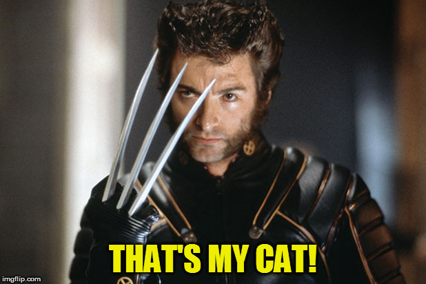 THAT'S MY CAT! | made w/ Imgflip meme maker