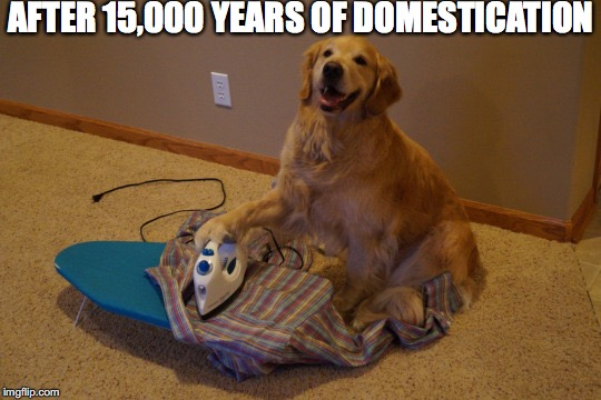A Dog's Tale | AFTER 15,000 YEARS OF DOMESTICATION | image tagged in dogs | made w/ Imgflip meme maker