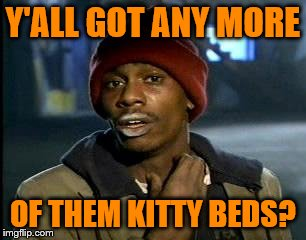 Y'all Got Any More Of That Meme | Y'ALL GOT ANY MORE OF THEM KITTY BEDS? | image tagged in memes,yall got any more of | made w/ Imgflip meme maker