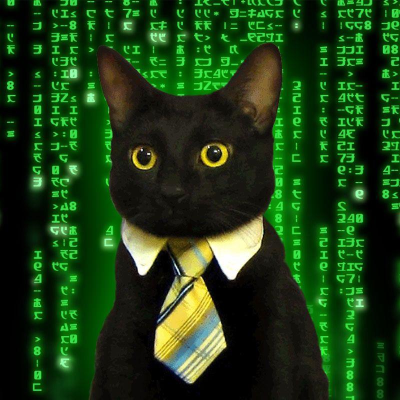 business cat matrix blank template imgflip