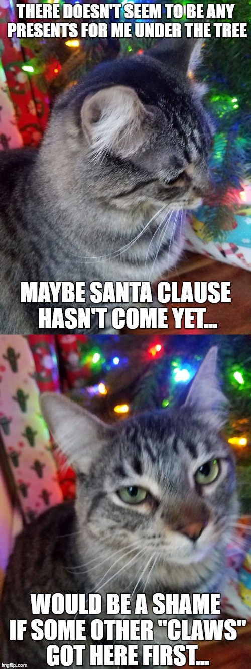 Mean Cat Memes Gifs Imgflip