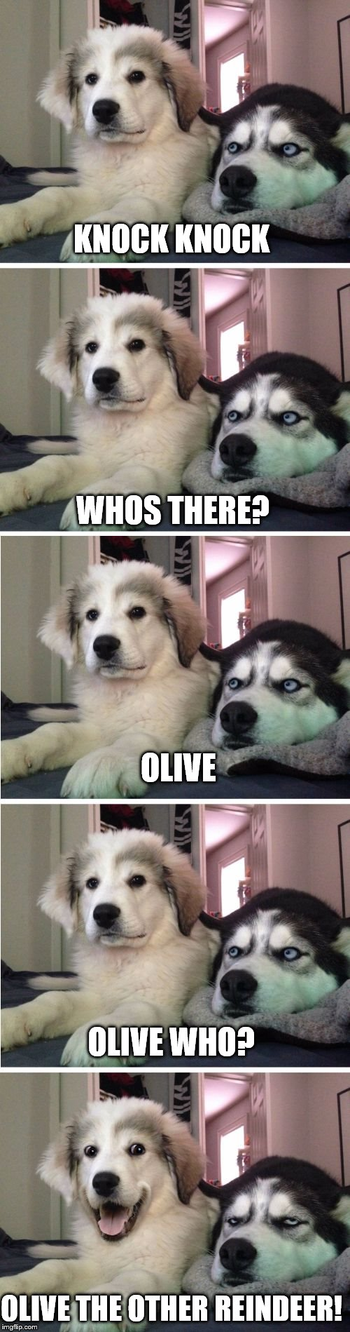 Knock Knock Dogs | KNOCK KNOCK WHOS THERE? OLIVE OLIVE WHO? OLIVE THE OTHER REINDEER! | image tagged in knock knock dogs | made w/ Imgflip meme maker
