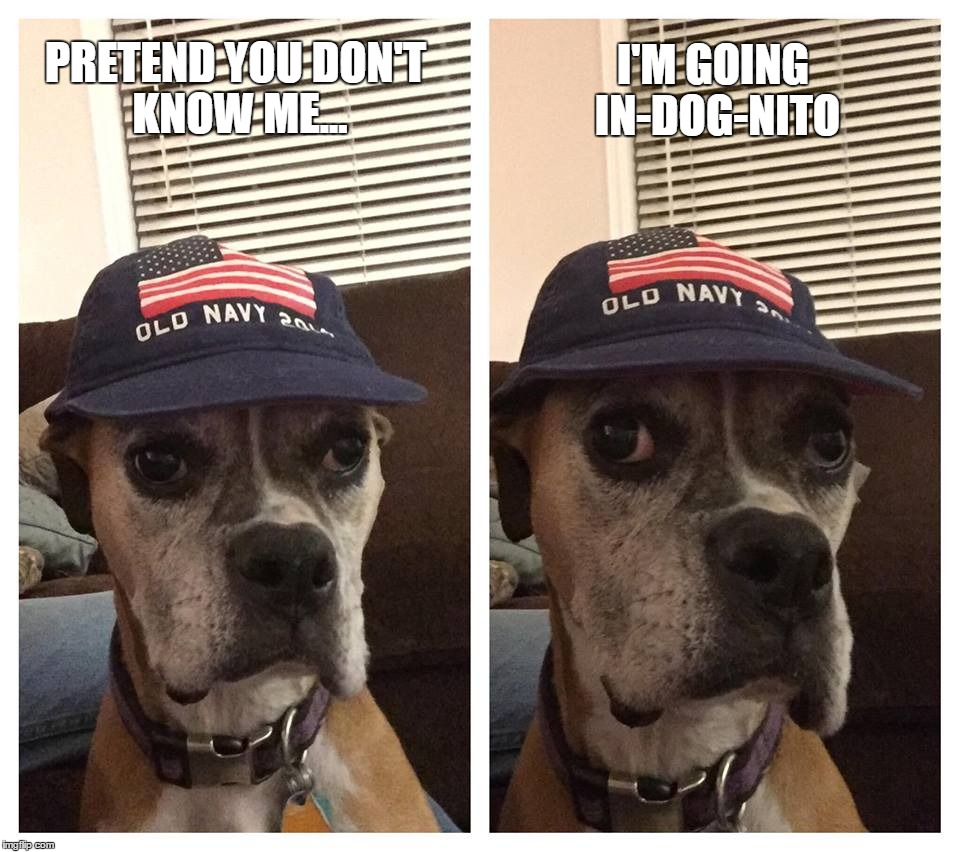 In-Dog-Nito | PRETEND YOU DON'T KNOW ME... I'M GOING IN-DOG-NITO | image tagged in dog,boxer,boxer dog,baseball bat | made w/ Imgflip meme maker