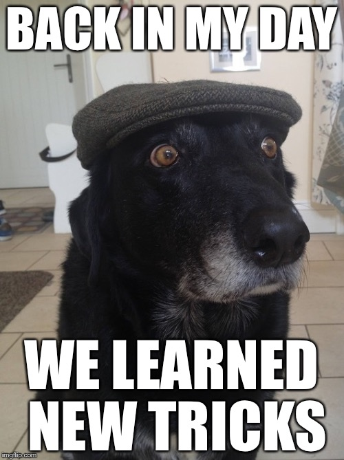 Back In My Day Dog | BACK IN MY DAY WE LEARNED NEW TRICKS | image tagged in back in my day dog,memes | made w/ Imgflip meme maker